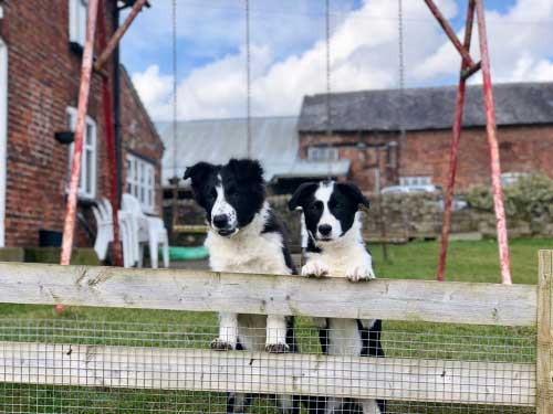 7 Top Dog Friendly Cheshire Attractions & Days Out