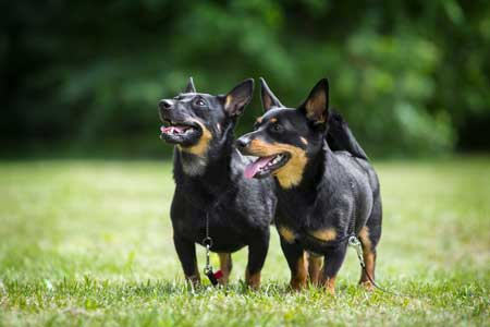 7 Top Dog Friendly Lancashire Attractions & Days Out