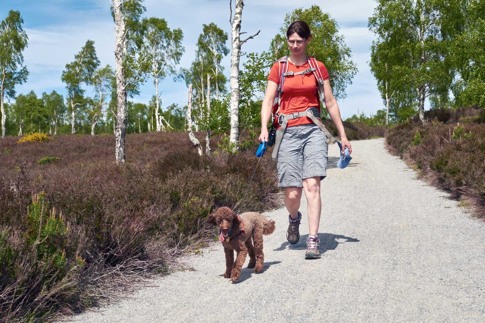 7 Top Dog Friendly Aviemore Attractions & Days Out