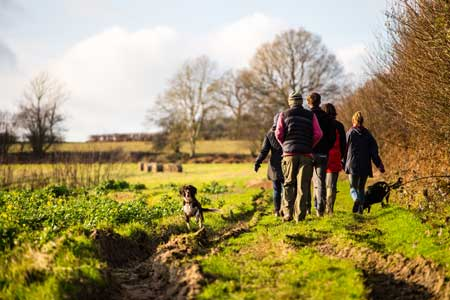 7 Top Dog Friendly Sussex Attractions & Days Out