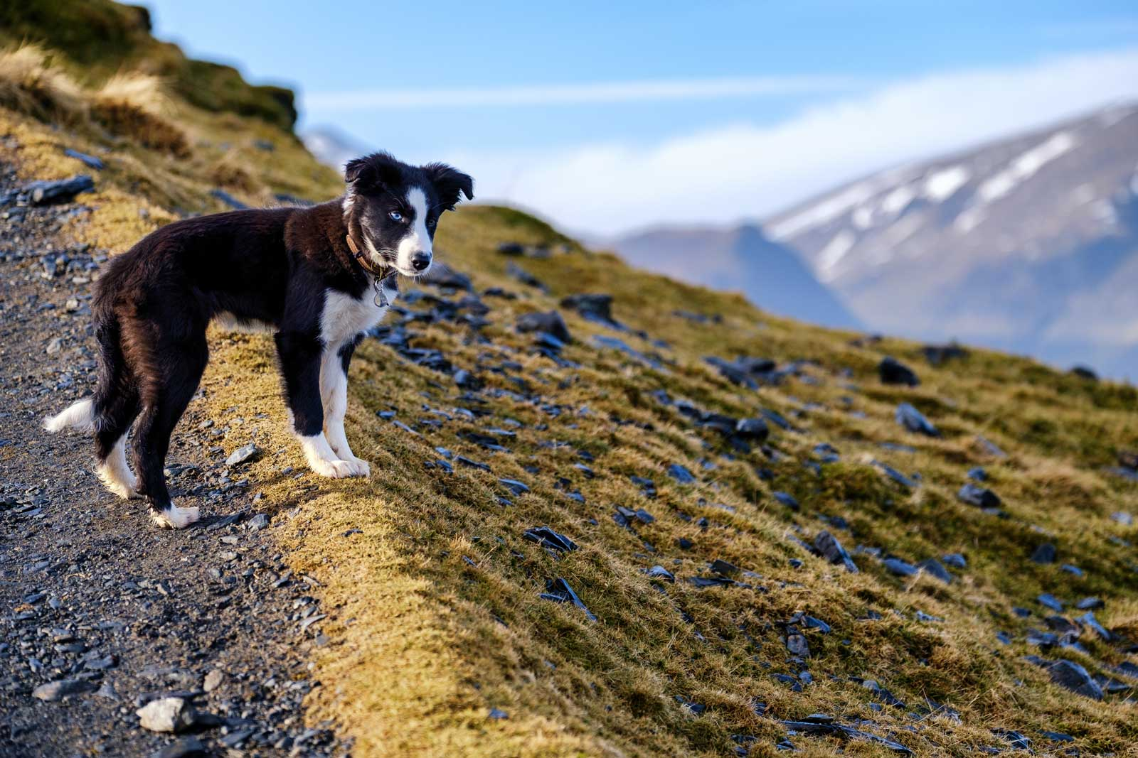 7 Top Dog Friendly Peak District Attractions & Days Out