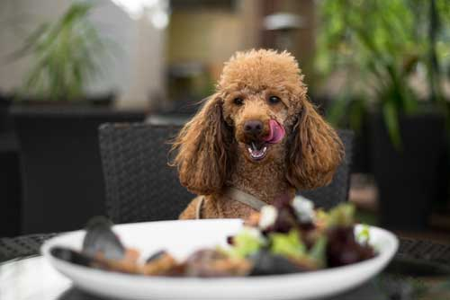 8 of the Best Dog Friendly Restaurants & Pubs in Scotland That Love Muddy Paws