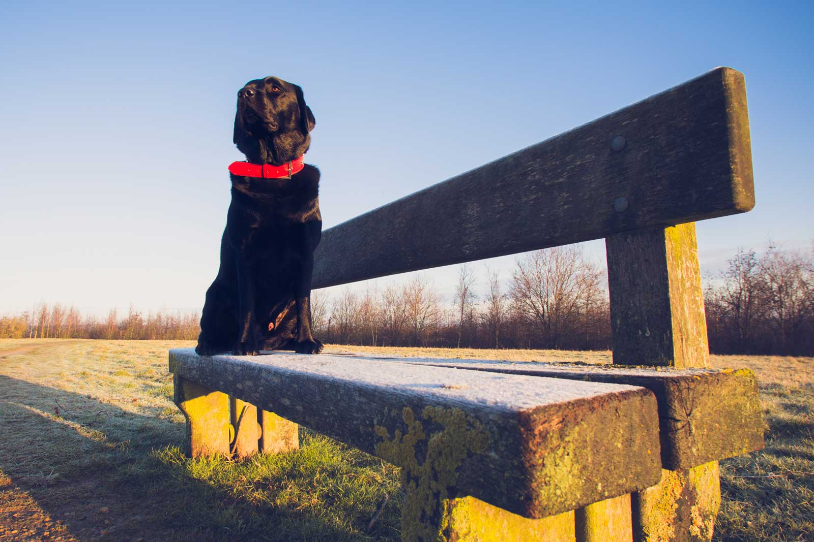 7 Top Dog Friendly Nottinghamshire Attractions & Days Out