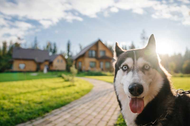 dog friendly lodges