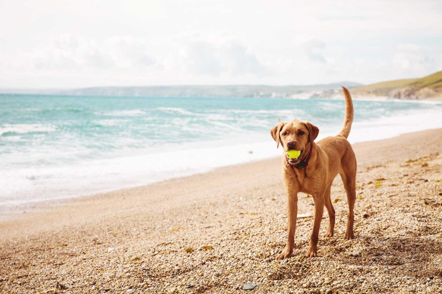 12 of the Best Dog Friendly Cottages In Cornwall