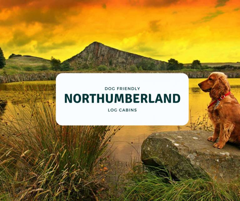 dog friendly Northumberland log cabins