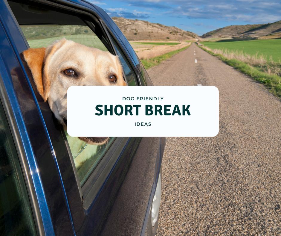 dog friendly short breaks